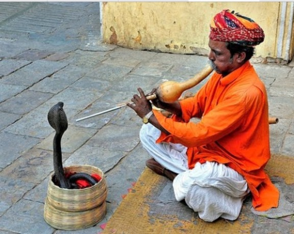 Snake charming through music and dancing